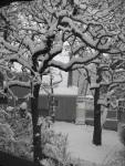 Snowfall In Victoria