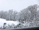 snowinvictoria
